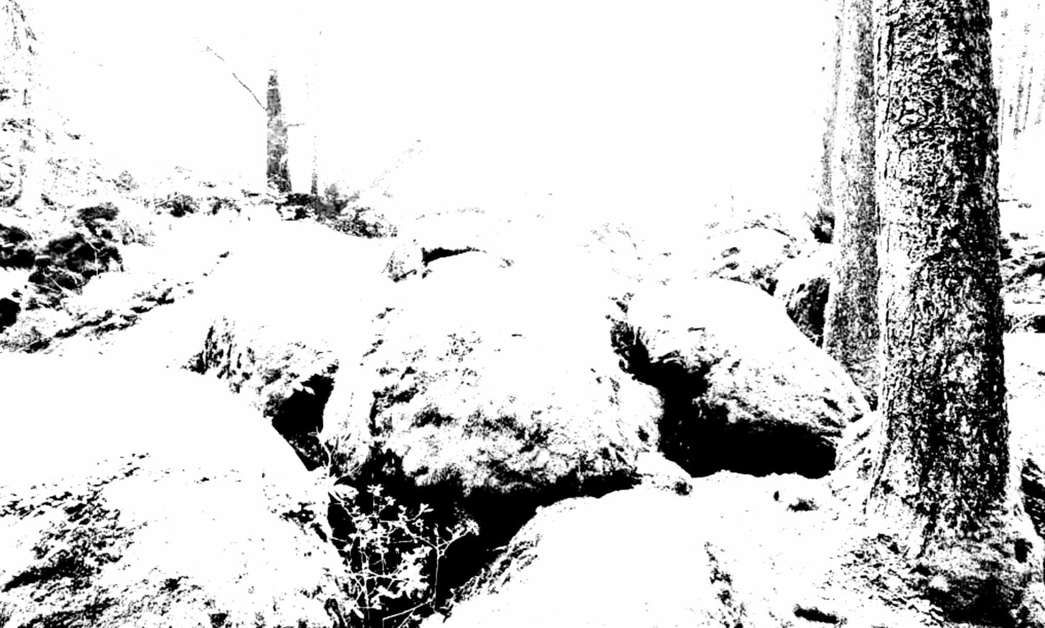 """"""" L'Ecorce des Songes """" - Encre de Chine sur papier Canson 1.05 X 0.75 - Prix sur demande -"""